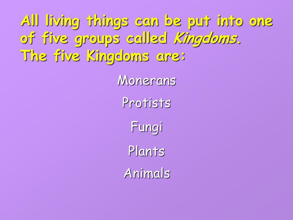 The Animal Kingdom: Vertebrates and andInvertebrates By: Sharon Kallaji and Heather Milewski Heather Milewski