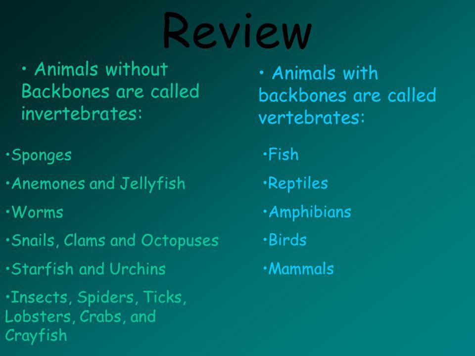 Mammals have Backbones