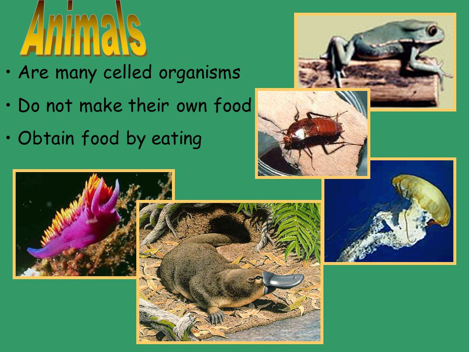 Plants Have chlorophyll Make their own food Are many celled organisms Have cell walls