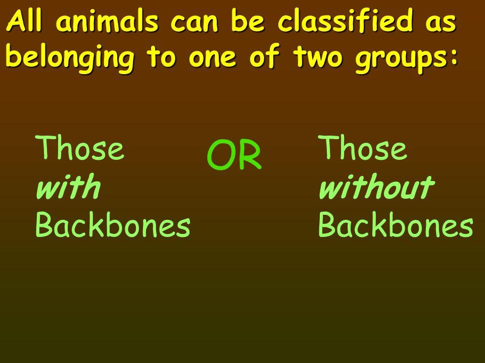 There are five groups of Vertebrates: Fish Amphibians Birds Mammals Reptiles