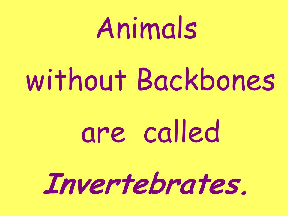 All animals can be classified as belonging to one of two groups: Those with Backbones Those without Backbones OR