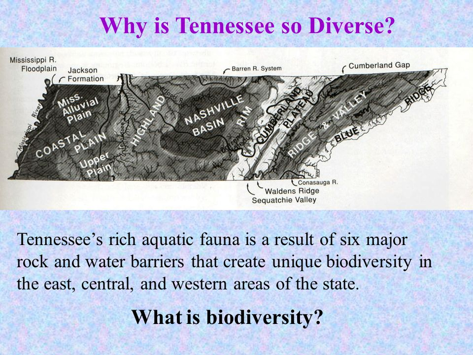 Why is Tennessee so Diverse? Tennessees rich aquatic fauna is a result of six major rock and water barriers that create unique biodiversity in the eas