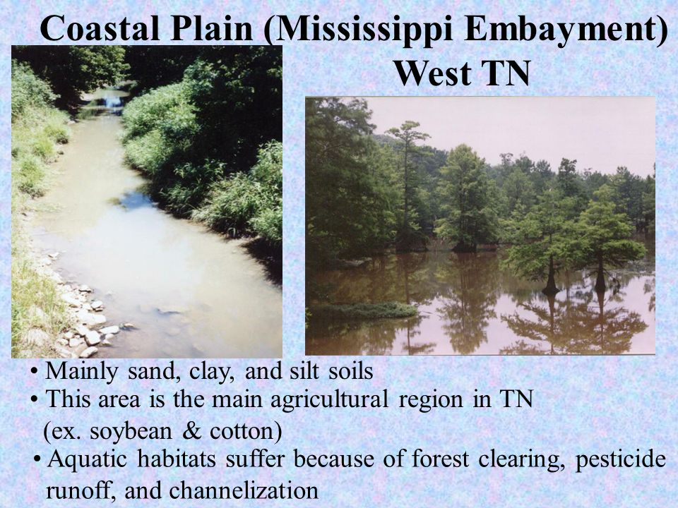 Coastal Plain (Mississippi Embayment) West TN Mainly sand, clay, and silt soils This area is the main agricultural region in TN (ex. soybean & cotton)