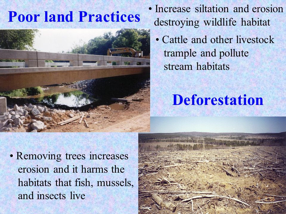 Poor land Practices Deforestation Removing trees increases erosion and it harms the habitats that fish, mussels, and insects live Cattle and other liv