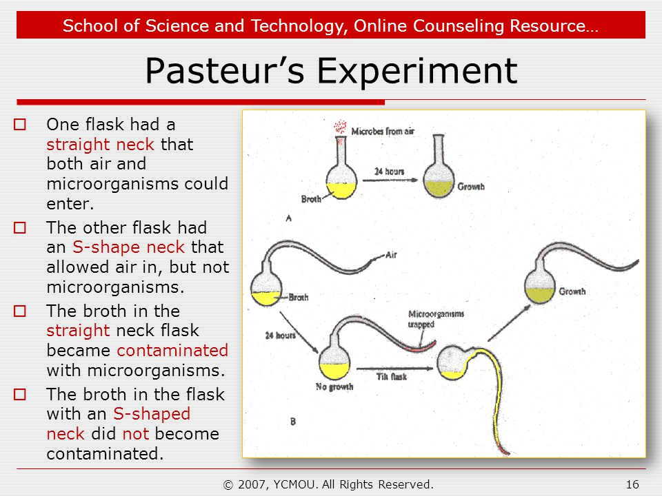 School of Science and Technology, Online Counseling Resource… Pasteurs Experiment One flask had a straight neck that both air and microorganisms could enter.