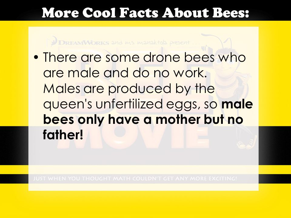 More Cool Facts About Bees: There are some drone bees who are male and do no work.