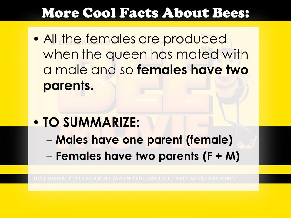 More Cool Facts About Bees: All the females are produced when the queen has mated with a male and so females have two parents.