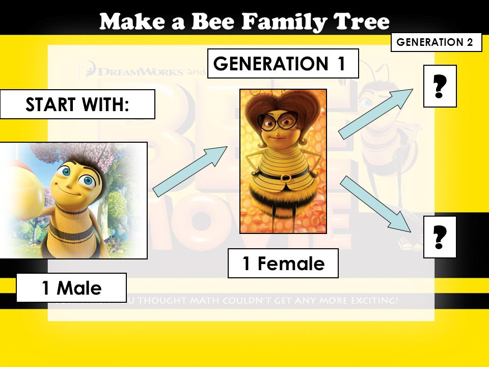Make a Bee Family Tree START WITH: 1 Male GENERATION 1 1 Female ? ? GENERATION 2