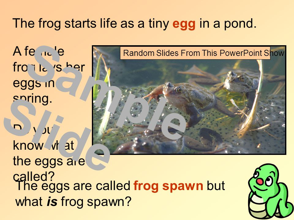 The frog starts life as a tiny egg in a pond. A female frog lays her eggs in spring.