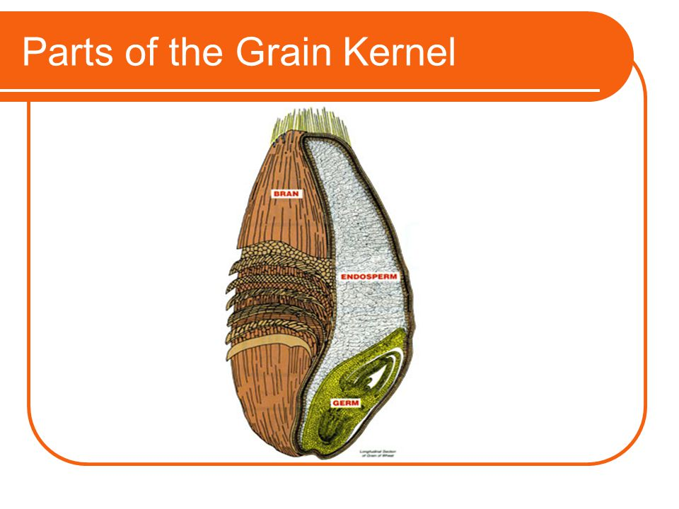 Parts of the Grain Kernel