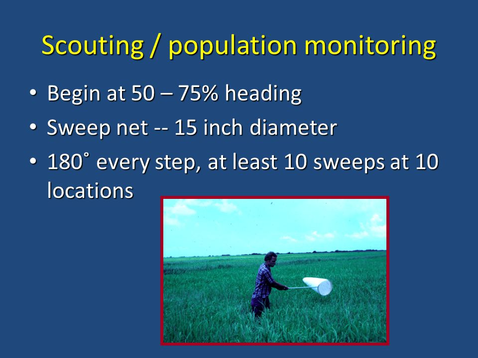 Scouting / population monitoring Begin at 50 – 75% heading Begin at 50 – 75% heading Sweep net -- 15 inch diameter Sweep net -- 15 inch diameter 180˚ every step, at least 10 sweeps at 10 locations 180˚ every step, at least 10 sweeps at 10 locations