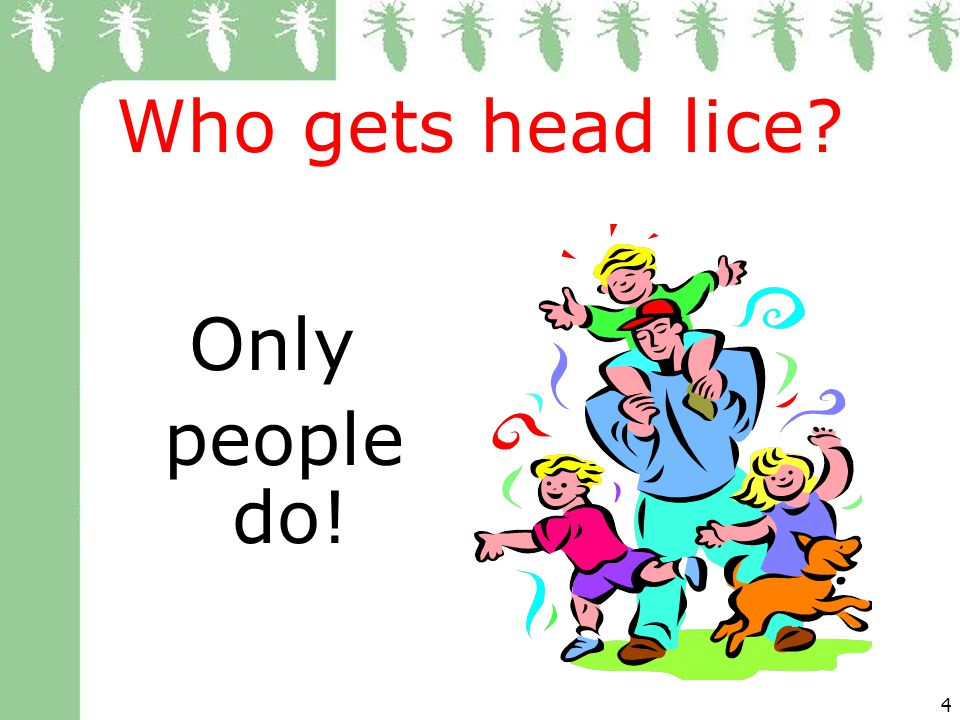 4 Who gets head lice? Only people do!