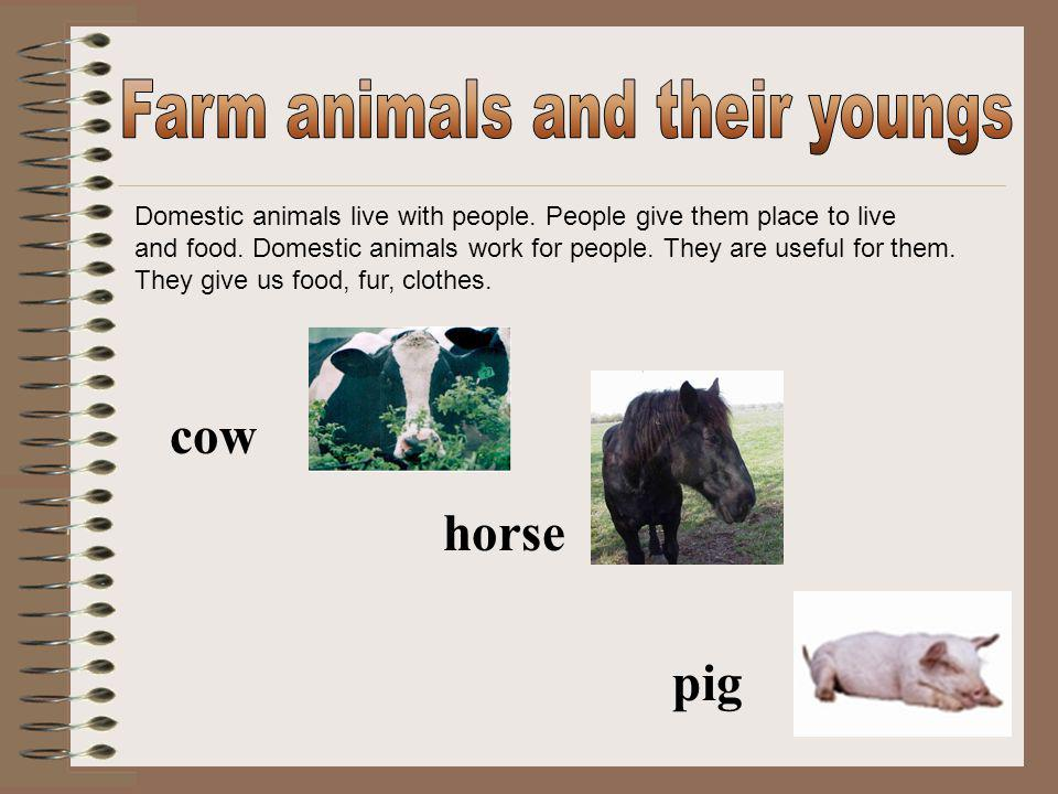 Domestic animals live with people.People give them place to live and food.