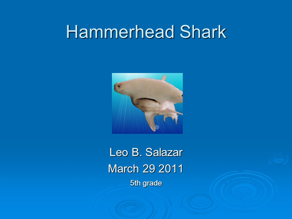 Hammerhead Shark Leo B. Salazar March 29 2011 5th grade