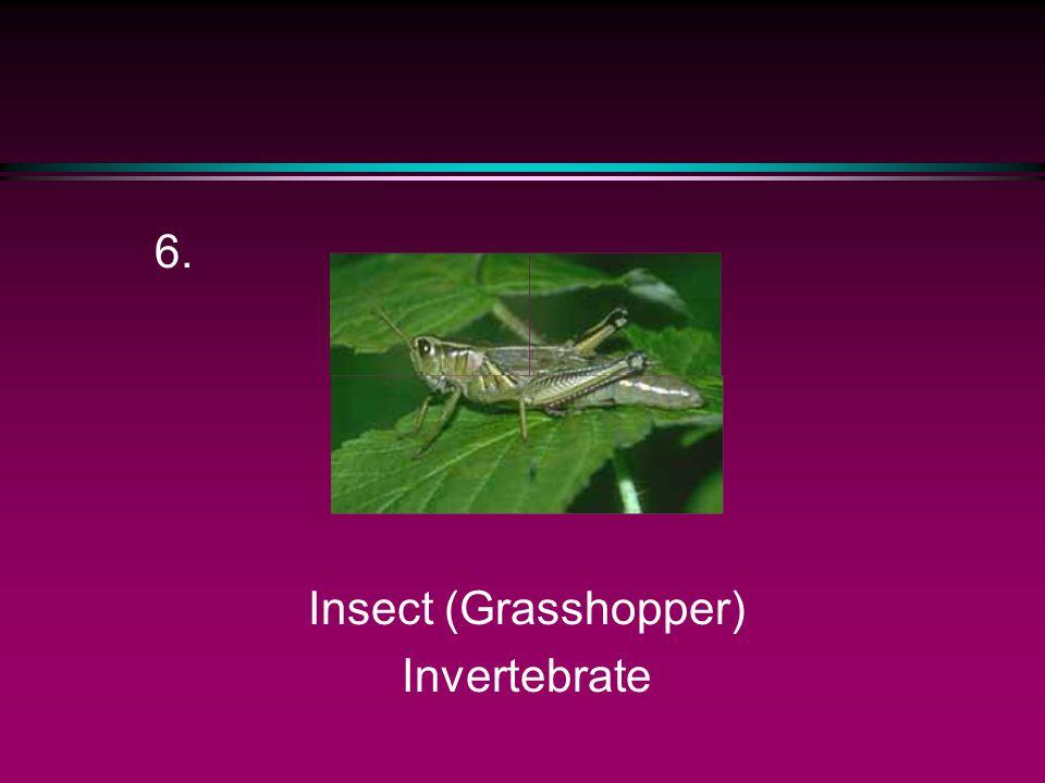 Amphibian (Frog) 5.