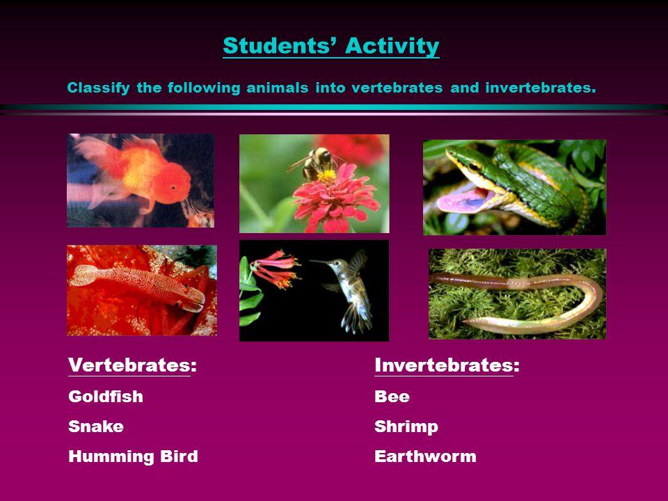 Animals Invertebrates (animals without backbone) Vertebrates (animals with backbone)