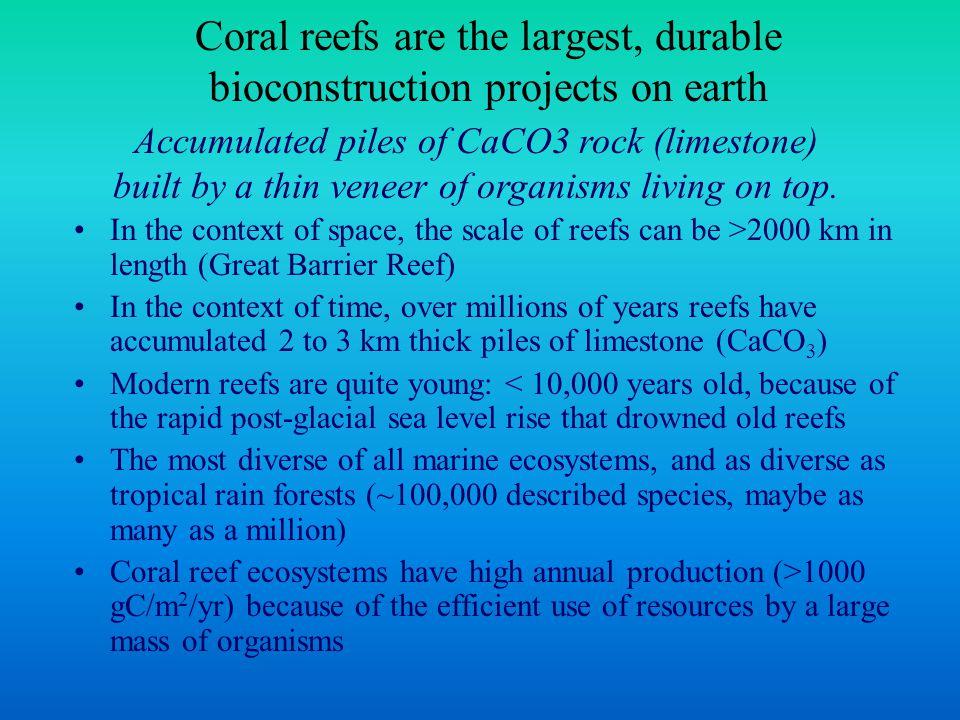A sample of reef diversity Sea turtle hatchling Sea turtle Serpulid worm crinoidNudibranch & eggs Gorgonian Diadema antillarum Acanthaster planci Tridacna spp.
