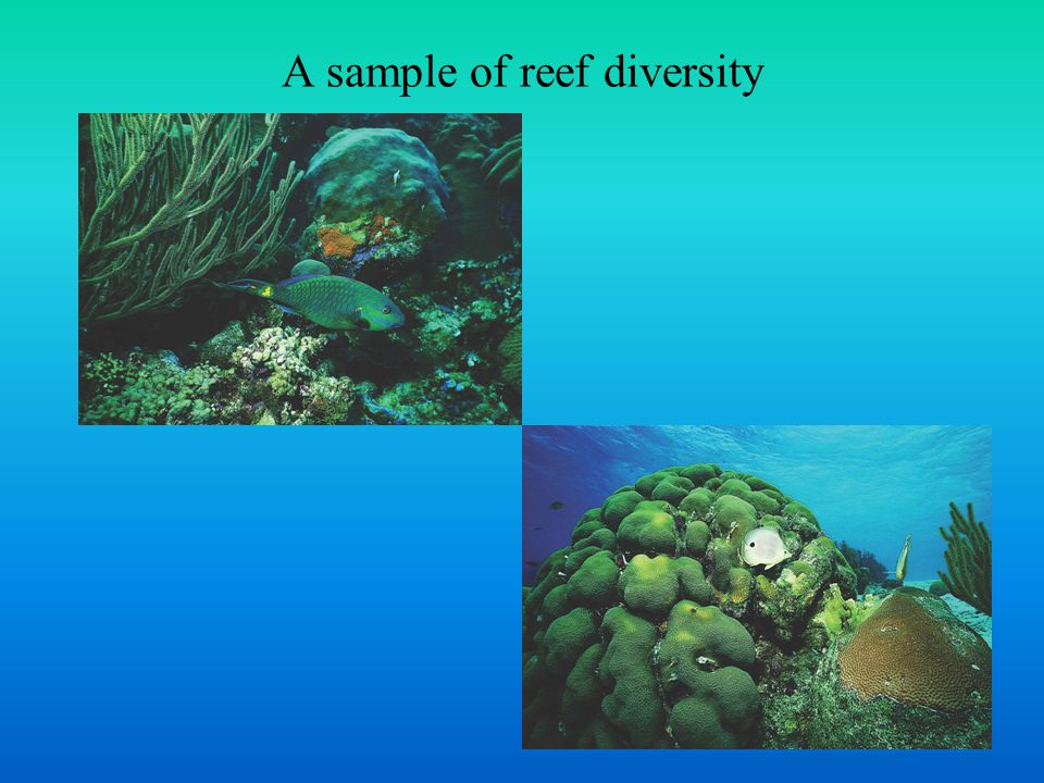 A sample of reef diversity