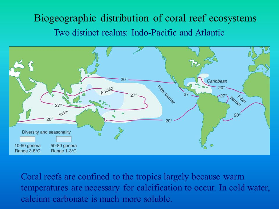 Biogeographic distribution of coral reef ecosystems Two distinct realms: Indo-Pacific and Atlantic Coral reefs are confined to the tropics largely because warm temperatures are necessary for calcification to occur.