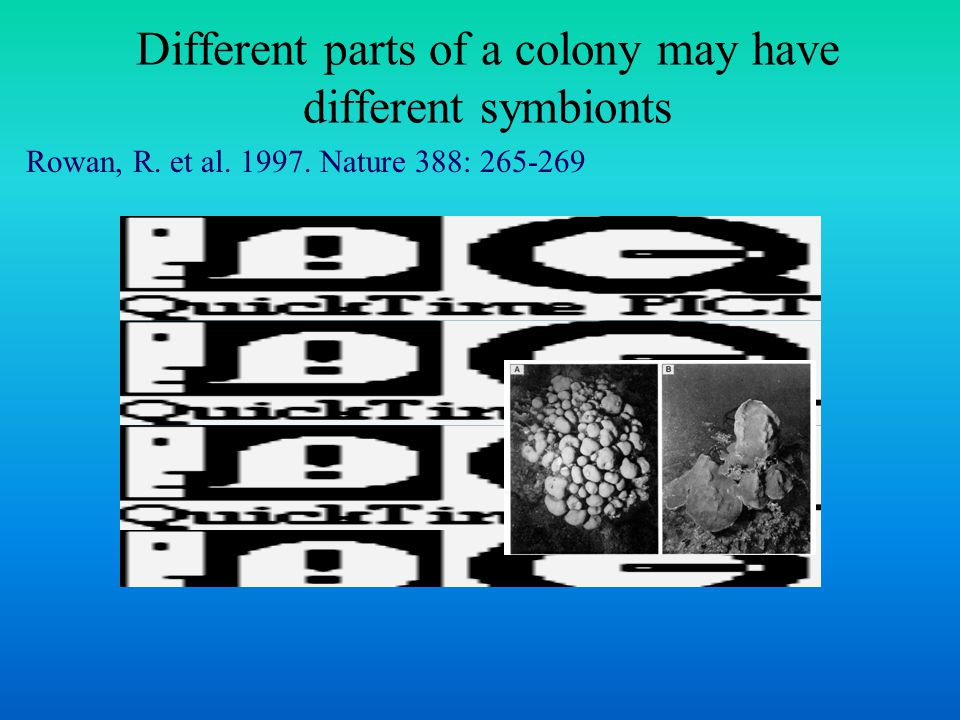 Different parts of a colony may have different symbionts Rowan, R. et al. 1997. Nature 388: 265-269