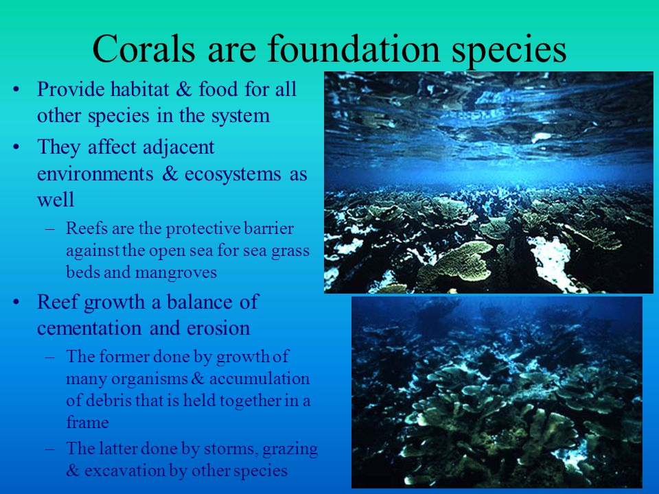 Nutritional symbiosis between coral & zooxanthellae drives formation of coral reef ecosystems Enables reef growth in unproductive tropical waters where concentrations of inorganic nutrients, like N & P, are low The key is the tight coupling between symbiont and host that enables them to recycle nutrients with extreme efficiency A paradox of high production of corals in tropical waters.