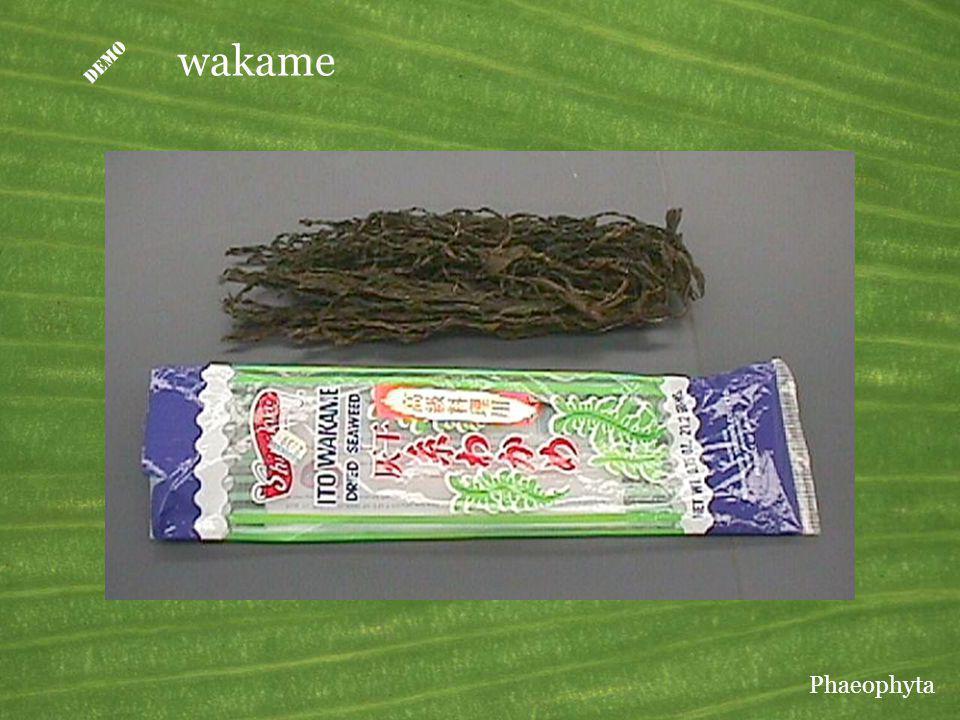 wakame Phaeophyta
