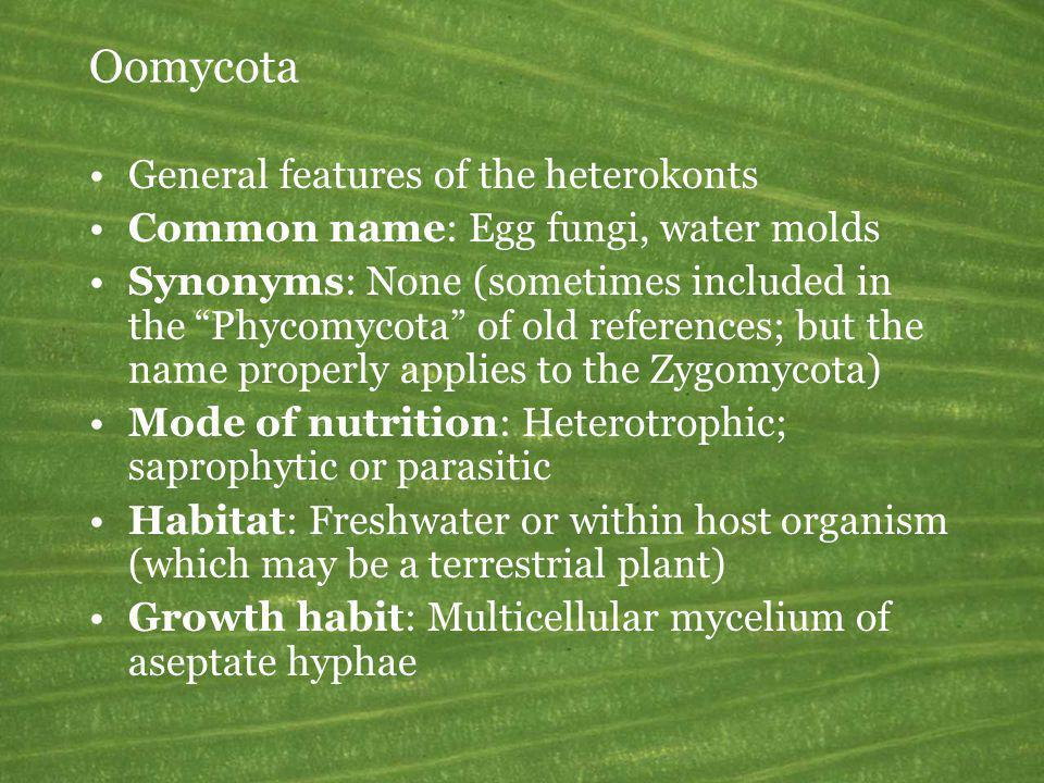Oomycota General features of the heterokonts Common name: Egg fungi, water molds Synonyms: None (sometimes included in the Phycomycota of old referenc