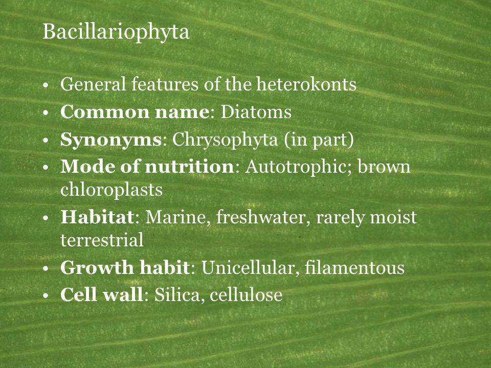 Bacillariophyta General features of the heterokonts Common name: Diatoms Synonyms: Chrysophyta (in part) Mode of nutrition: Autotrophic; brown chlorop