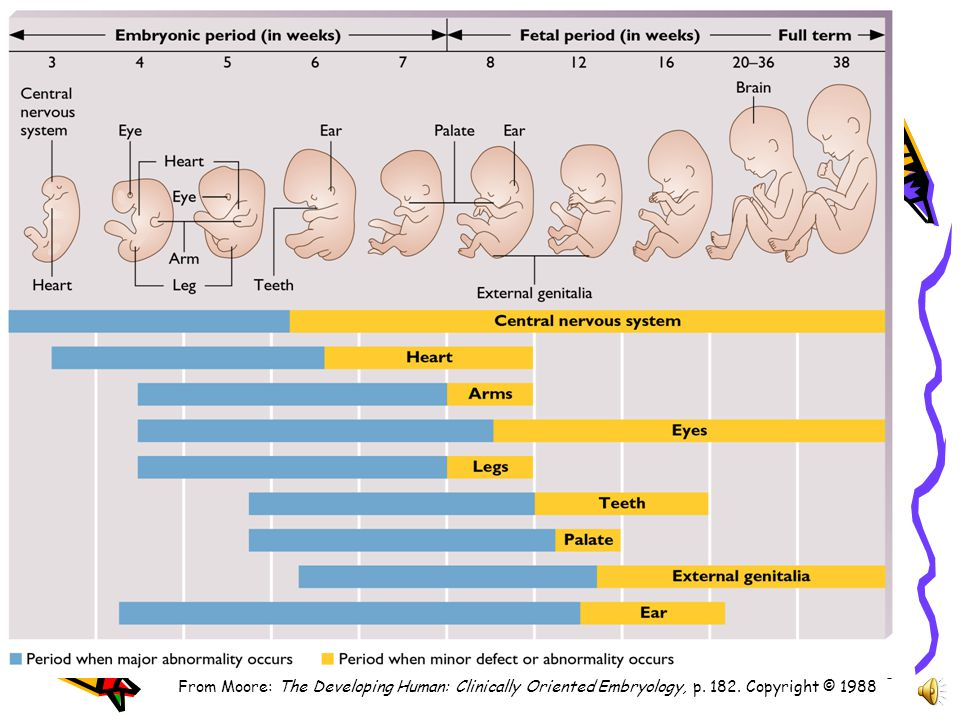 5 Influences on Prenatal Development Teratogens: any agents causing abnormalities –Chemicals - Drugs, chemicals, certain medications, i.e.