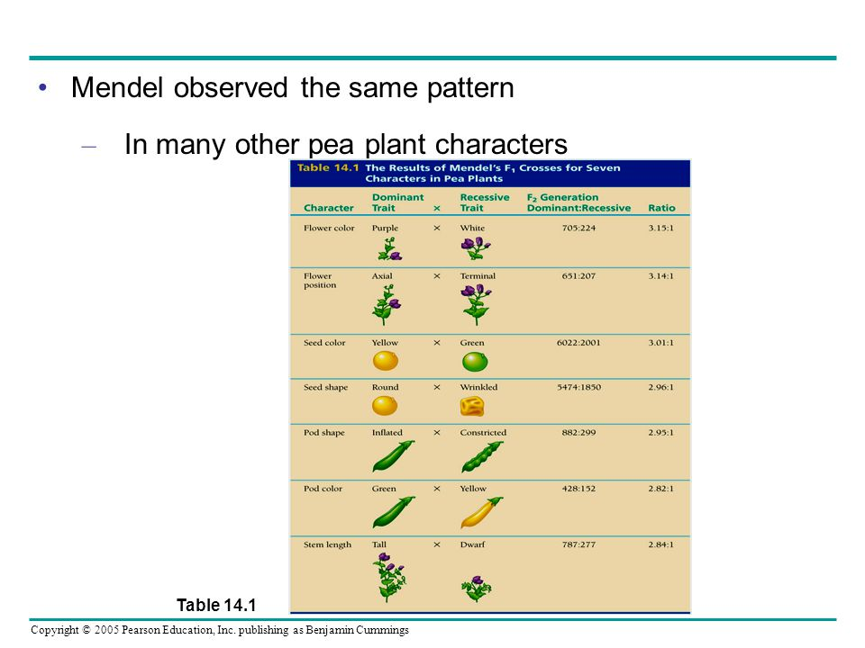 Copyright © 2005 Pearson Education, Inc. publishing as Benjamin Cummings Mendel observed the same pattern – In many other pea plant characters Table 1
