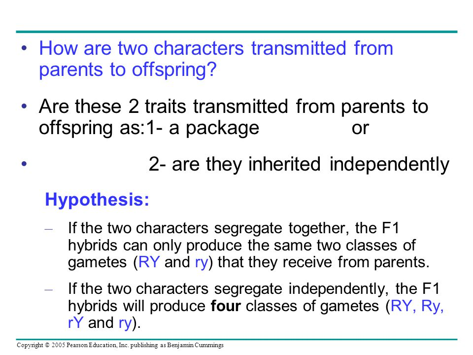 Copyright © 2005 Pearson Education, Inc. publishing as Benjamin Cummings How are two characters transmitted from parents to offspring? Are these 2 tra