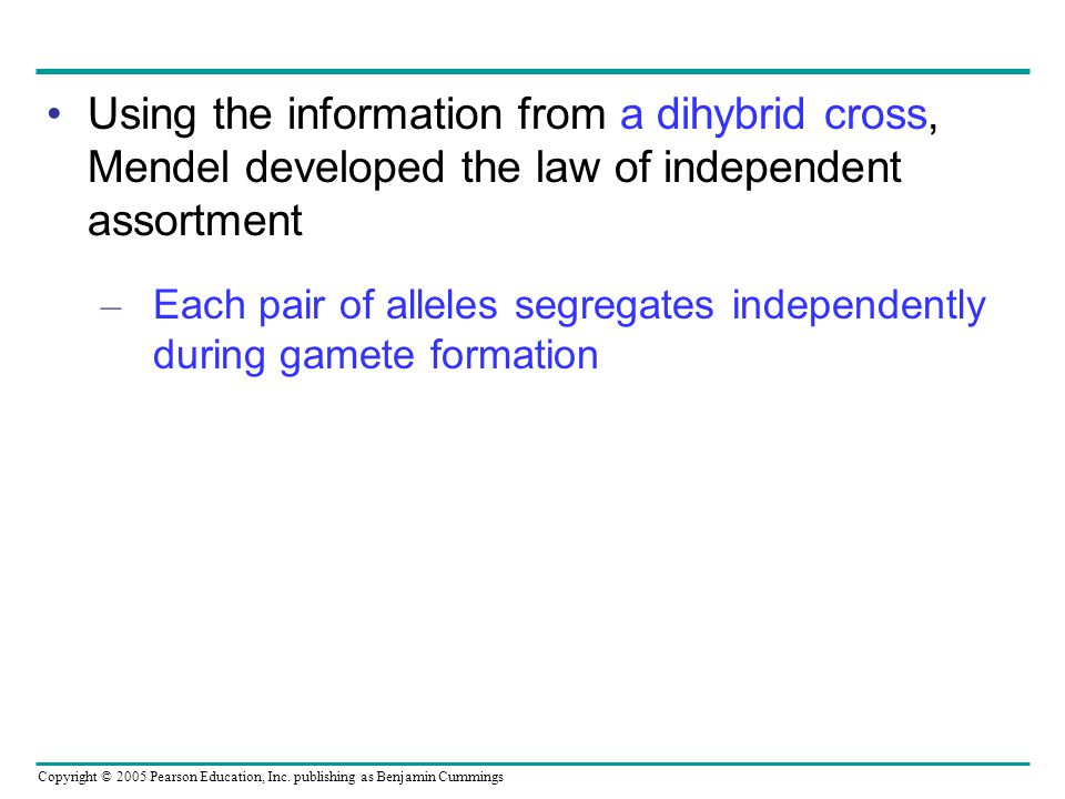 Copyright © 2005 Pearson Education, Inc. publishing as Benjamin Cummings Using the information from a dihybrid cross, Mendel developed the law of inde