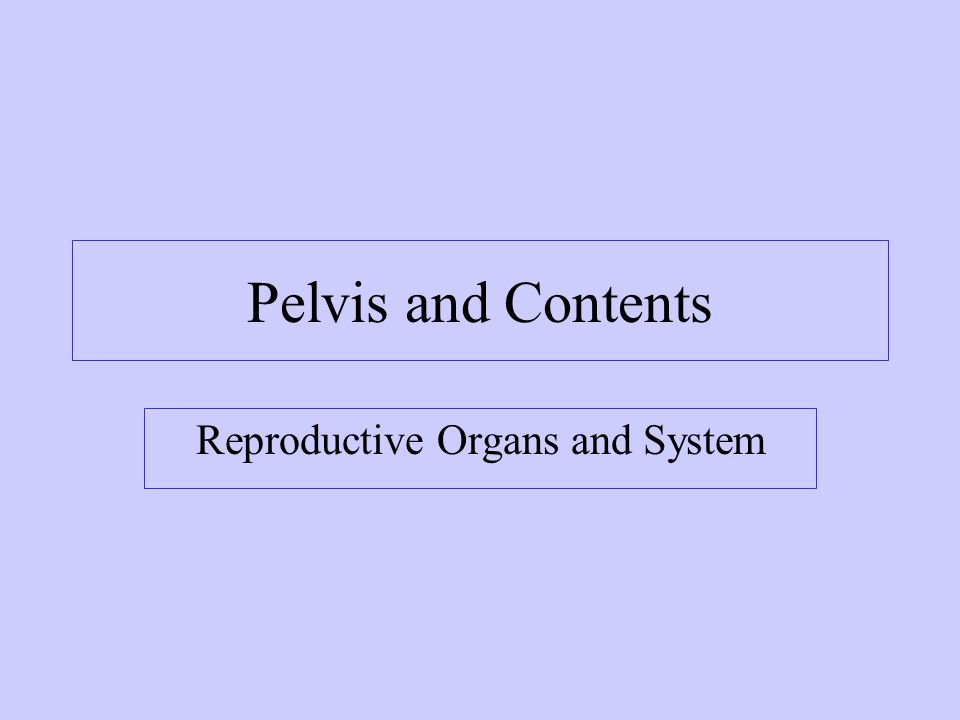 Spermatic Cord Collective name for structures associated with the scrotum Passes through inguinal canal Includes –Vas Deferens –Testicular Arteries + Veins –Lymphatic vessels –Cremaster muscle fibers –Nerves pg 673