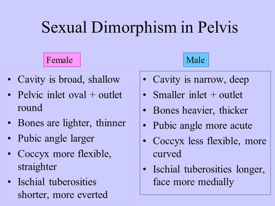 Sexual Dimorphism in Pelvis pg 189
