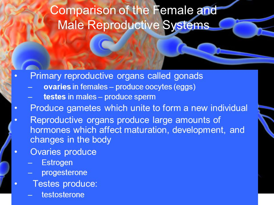 ... gonads – ovaries in females – produce oocytes (eggs) – teste