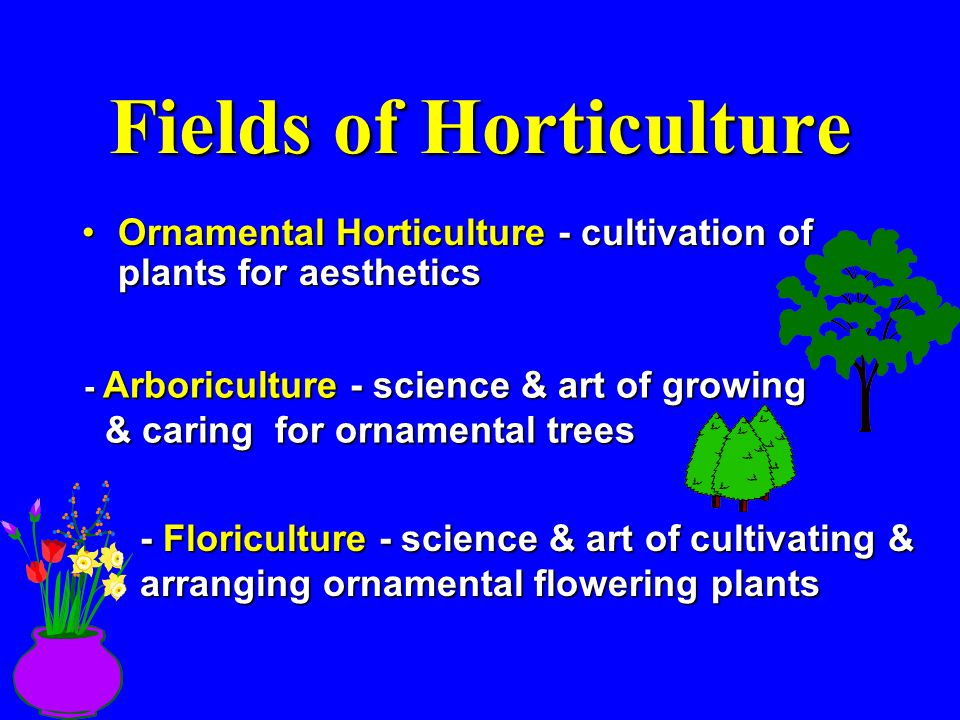Fields of Horticulture Ornamental Horticulture - cultivation of plants for aestheticsOrnamental Horticulture - cultivation of plants for aesthetics -