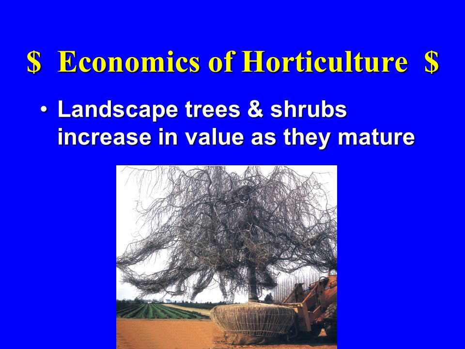 $ Economics of Horticulture $ Landscape trees & shrubs increase in value as they matureLandscape trees & shrubs increase in value as they mature