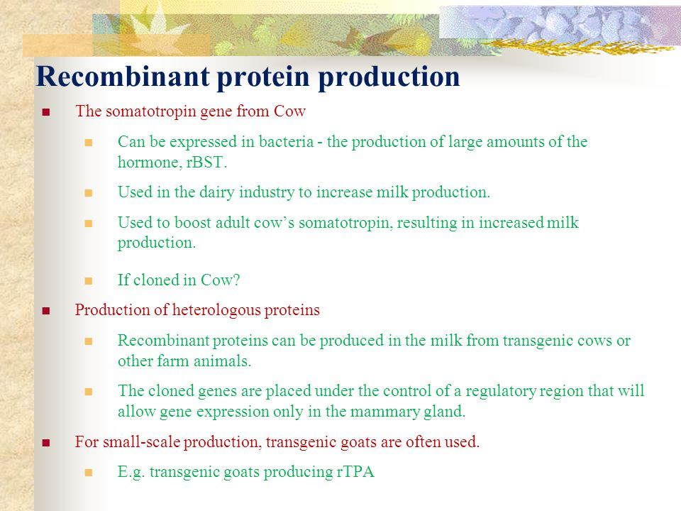 Recombinant protein production The somatotropin gene from Cow Can be expressed in bacteria - the production of large amounts of the hormone, rBST. Use