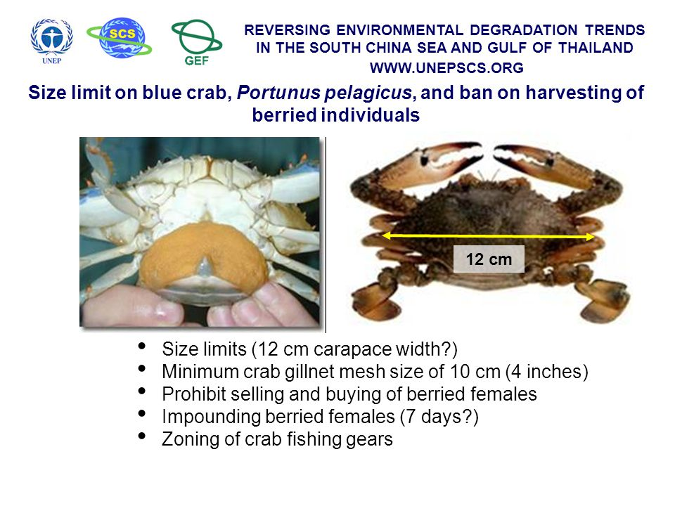 REVERSING ENVIRONMENTAL DEGRADATION TRENDS IN THE SOUTH CHINA SEA AND GULF OF THAILAND WWW.UNEPSCS.ORG Size limits (12 cm carapace width?) Minimum cra