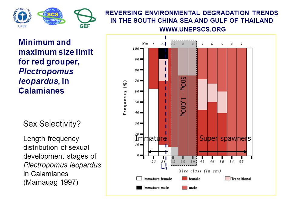 REVERSING ENVIRONMENTAL DEGRADATION TRENDS IN THE SOUTH CHINA SEA AND GULF OF THAILAND WWW.UNEPSCS.ORG Length frequency distribution of sexual develop