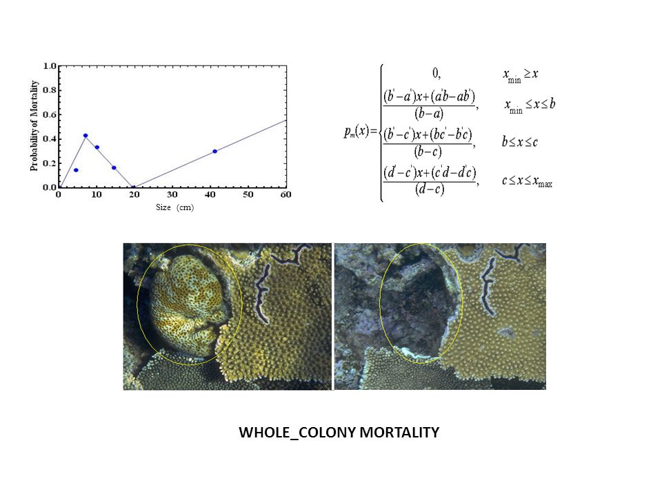 Size (cm) WHOLE_COLONY MORTALITY