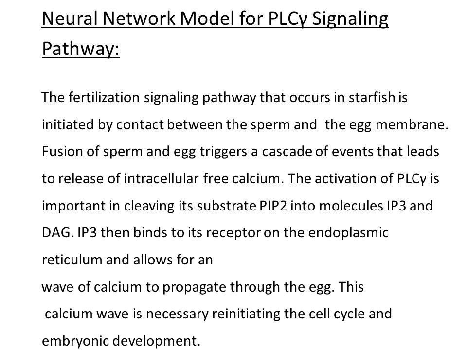 Neural Network Model for PLCγ Signaling Pathway: The fertilization signaling pathway that occurs in starfish is initiated by contact between the sperm and the egg membrane.