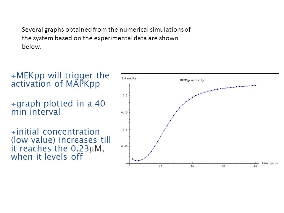 MEKpp will trigger the activation of MAPKpp graph plotted in a 40 min interval initial concentration (low value) increases till it reaches the 0.23 M, when it levels off Several graphs obtained from the numerical simulations of the system based on the experimental data are shown below.