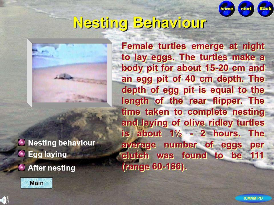 ICMAM-PD Main Egg laying After nesting Nesting behaviour Nesting Behaviour Female turtles emerge at night to lay eggs.