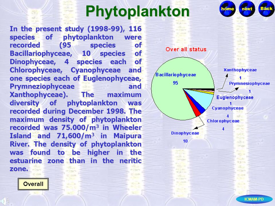 ICMAM-PDPhytoplankton In the present study (1998-99), 116 species of phytoplankton were recorded (95 species of Bacillariophyceae, 10 species of Dinophyceae, 4 species each of Chlorophyceae, Cyanophyceae and one species each of Euglenophyceae, Prymneziophyceae and Xanthophyceae).