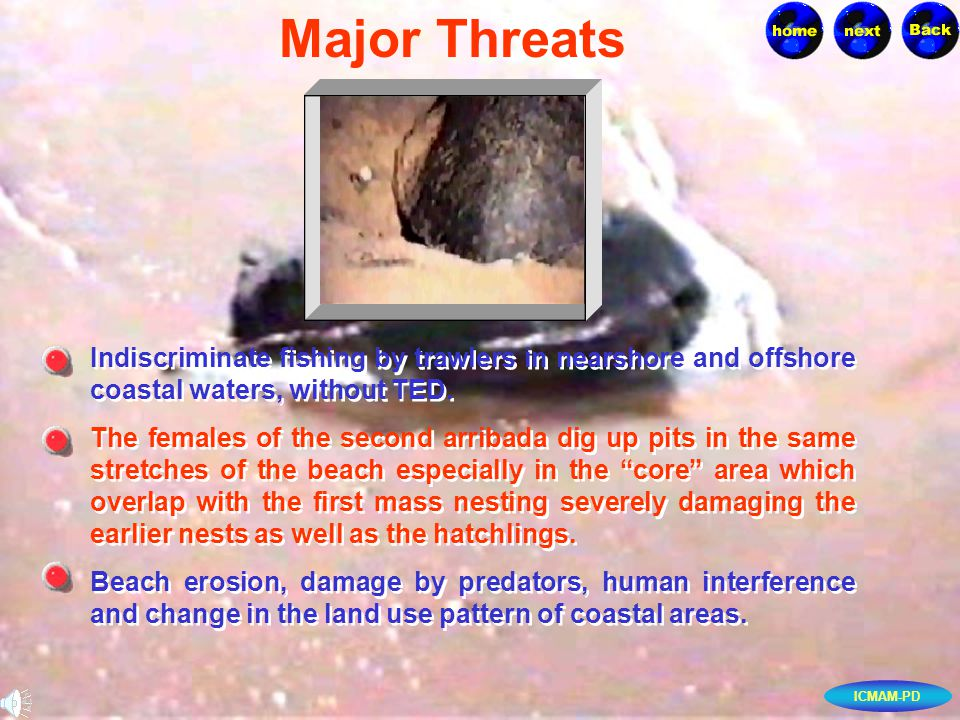 ICMAM-PD Indiscriminate fishing by trawlers in nearshore and offshore coastal waters, without TED.