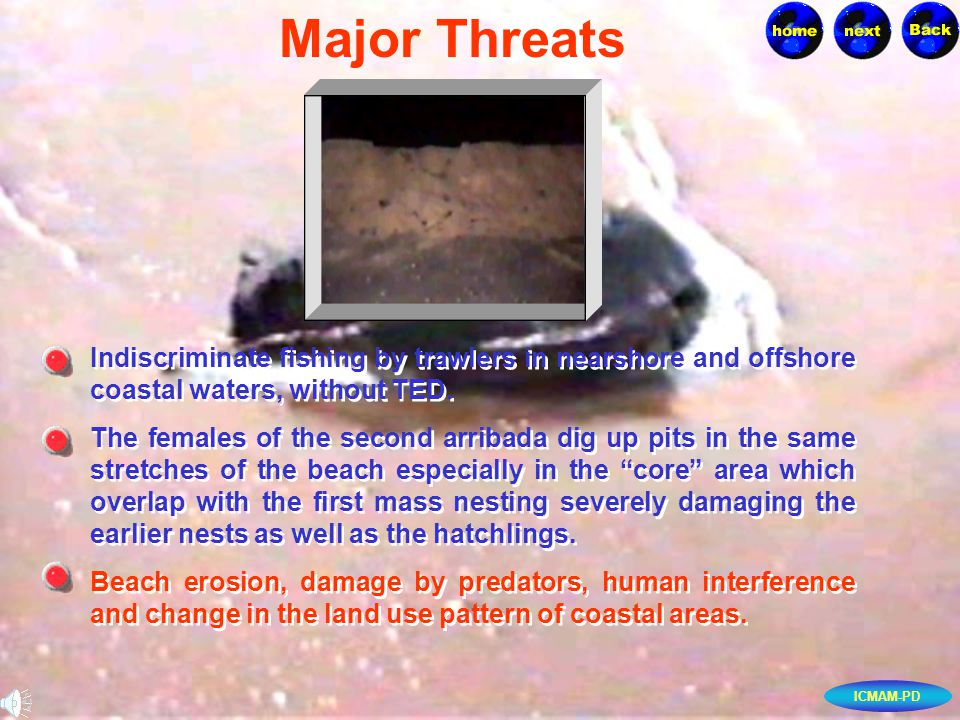 ICMAM-PD Indiscriminate fishing by trawlers in nearshore and offshore coastal waters, without TED. Indiscriminate fishing by trawlers in nearshore and