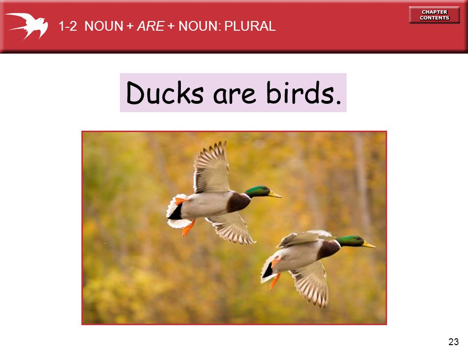 23 Ducks are birds. 1-2 NOUN + ARE + NOUN: PLURAL