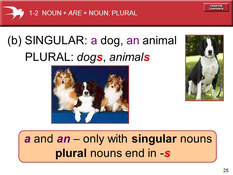 25 PLURAL: dogs, animals (b) SINGULAR: a dog, an animal a and an – only with singular nouns plural nouns end in -s 1-2 NOUN + ARE + NOUN: PLURAL