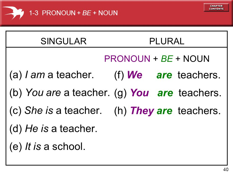 40 SINGULAR (a) I am a teacher. (b) You are a teacher.